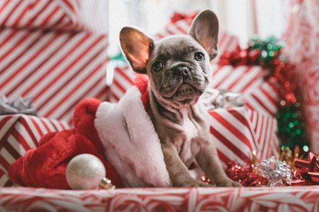 Offrir un animal pour Noël